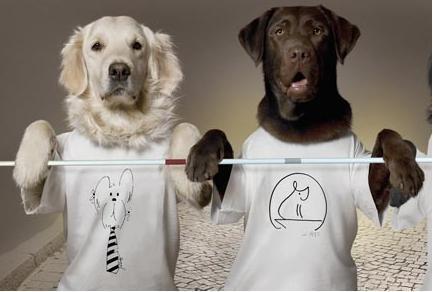 vodici psi