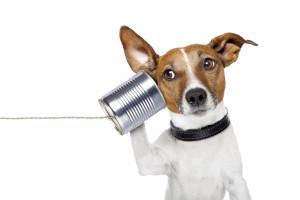 Elektronického hlídacího psa, nemusíte krmit.