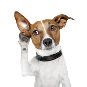 Elektronický hlídací pes na hlídání do všech objektů – pokračování