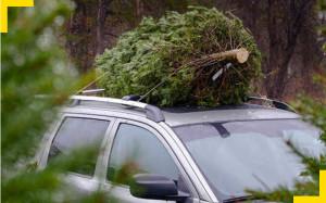 Svět v bezpečí - ÚAMK radí: Povezete vánoční stromek