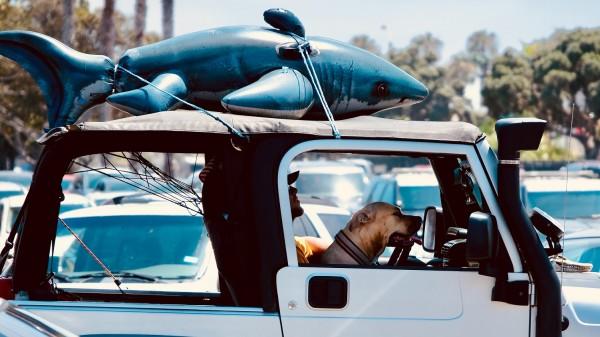 pes v aute